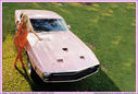 Playmate_1969_Connie_Kreski_Shelby_GT500.jpg