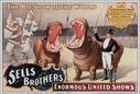 Sells_Brothers_Hippo_1896.jpg